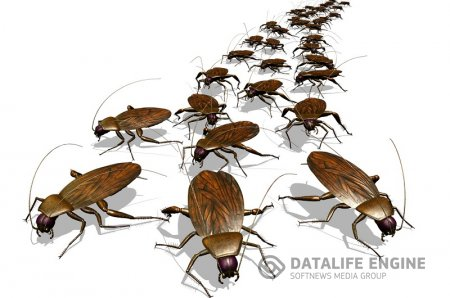 Откуда появились тараканы?