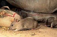 Уничтожение мышей в Екатеринбурге