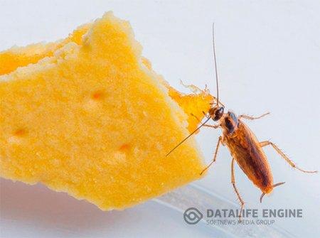 Почему тараканов называют стасиками?