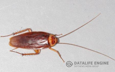 Как травить тараканов в квартире?